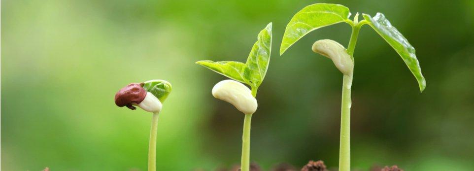 crescita di un germoglio