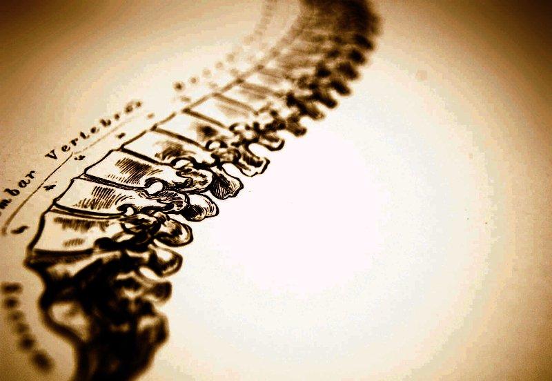 Visit Rippa Chiropractic