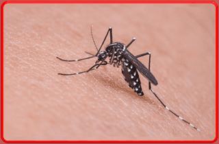 Disinfestazione ambientale contro zanzare e mosche