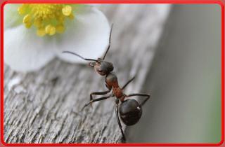 Disinfestazione ambientale insetti
