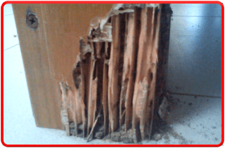 Trattamento contro le termiti sotterranee