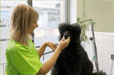 Il lavoro di taglio a forbici su un cane
