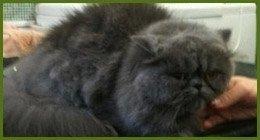 trattamento pelo per gatti