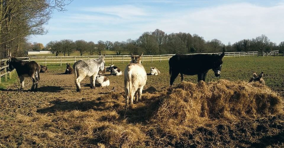 Donkeys available for hire
