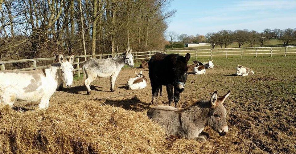 Donkey hire