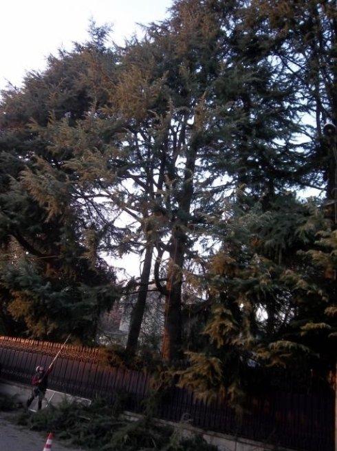 Potatura, messa in sicurezza tramite tecnica Tree Climbing