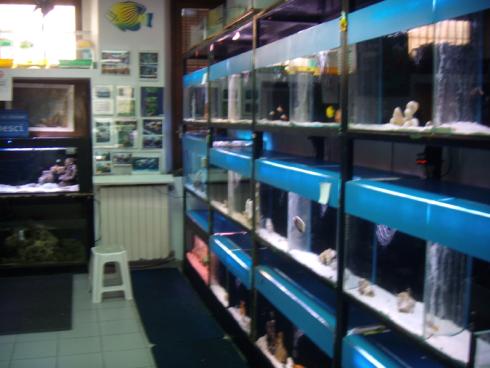 Il negozio 5