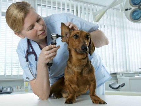 analisi diagnostiche veterinarie