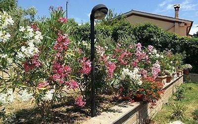 piante fiori in giardino