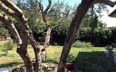 vista giardino con alberi