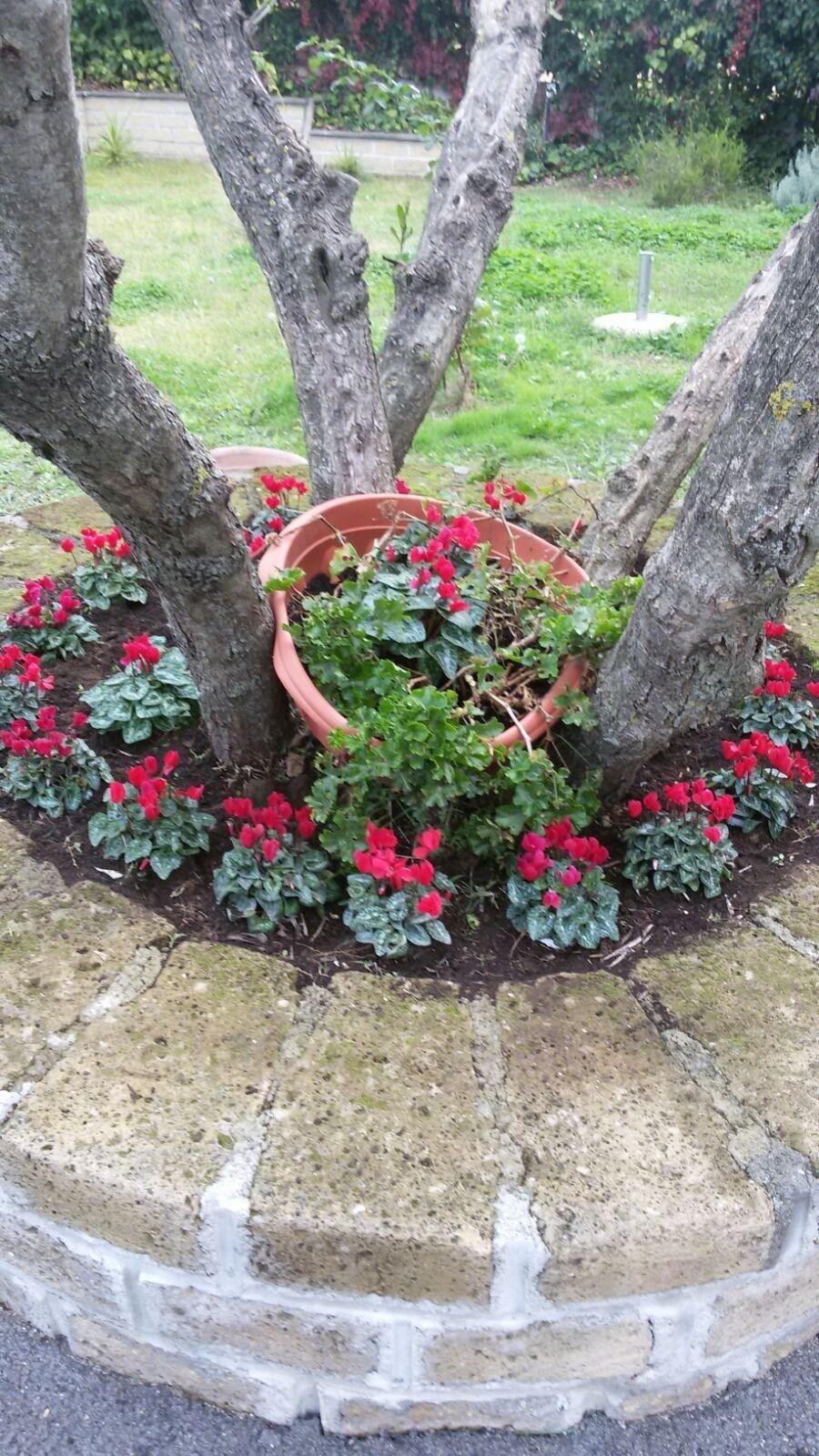 alberi con fiori piante in un giardino