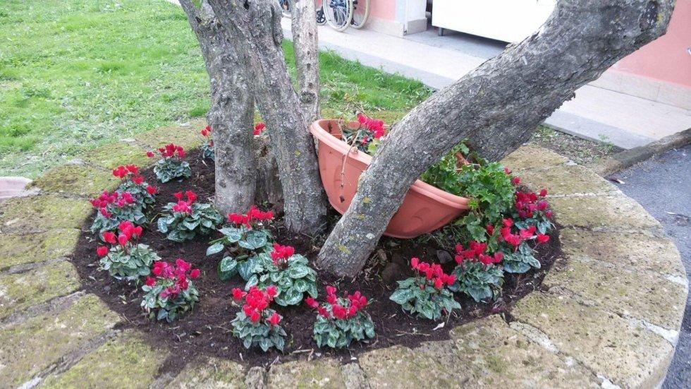 alberi con fiori piante e vaso in un giardino