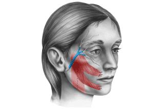 disegno di donna e muscoli facciali