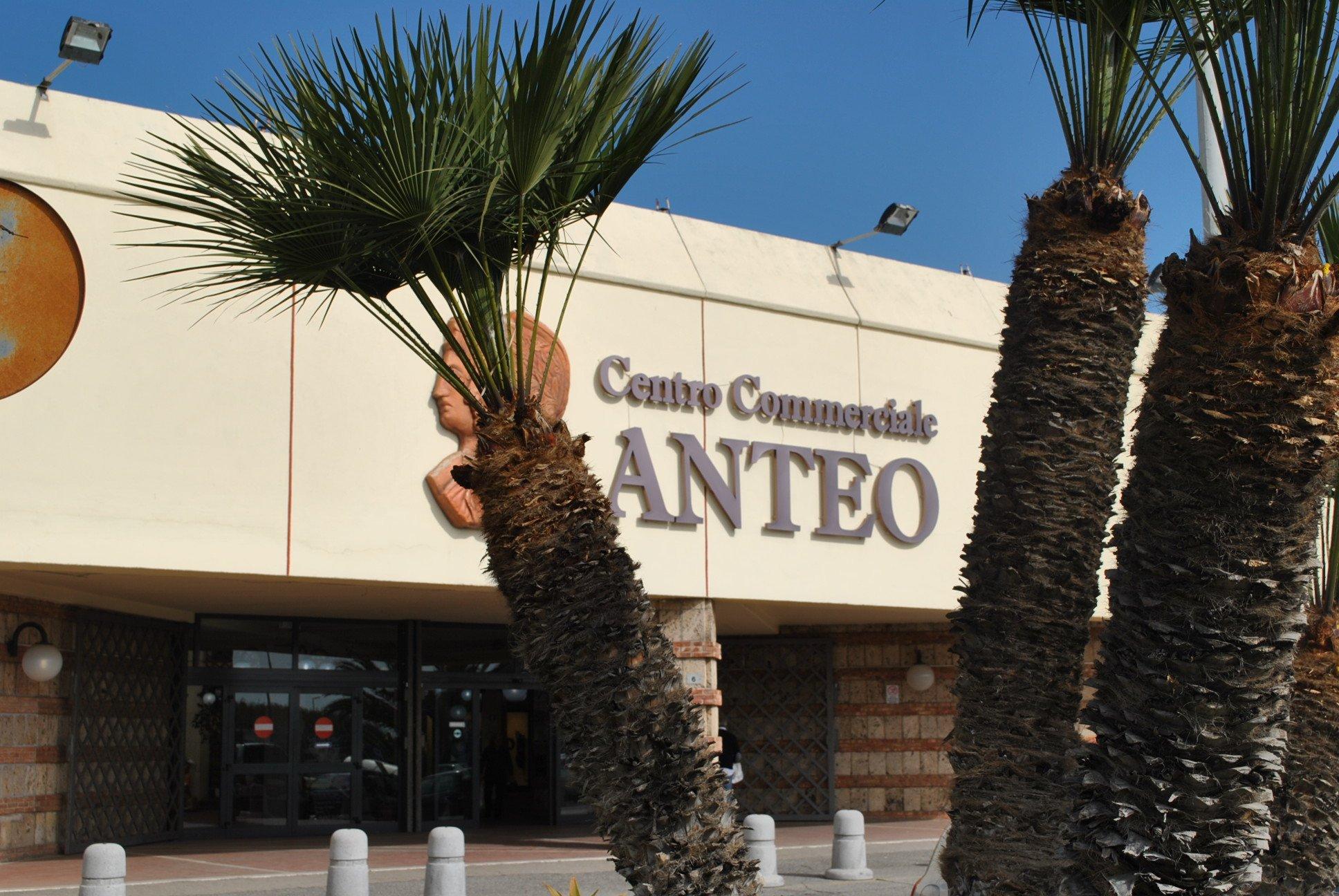 Due palme di fronte al Centro Commerciale Anteo