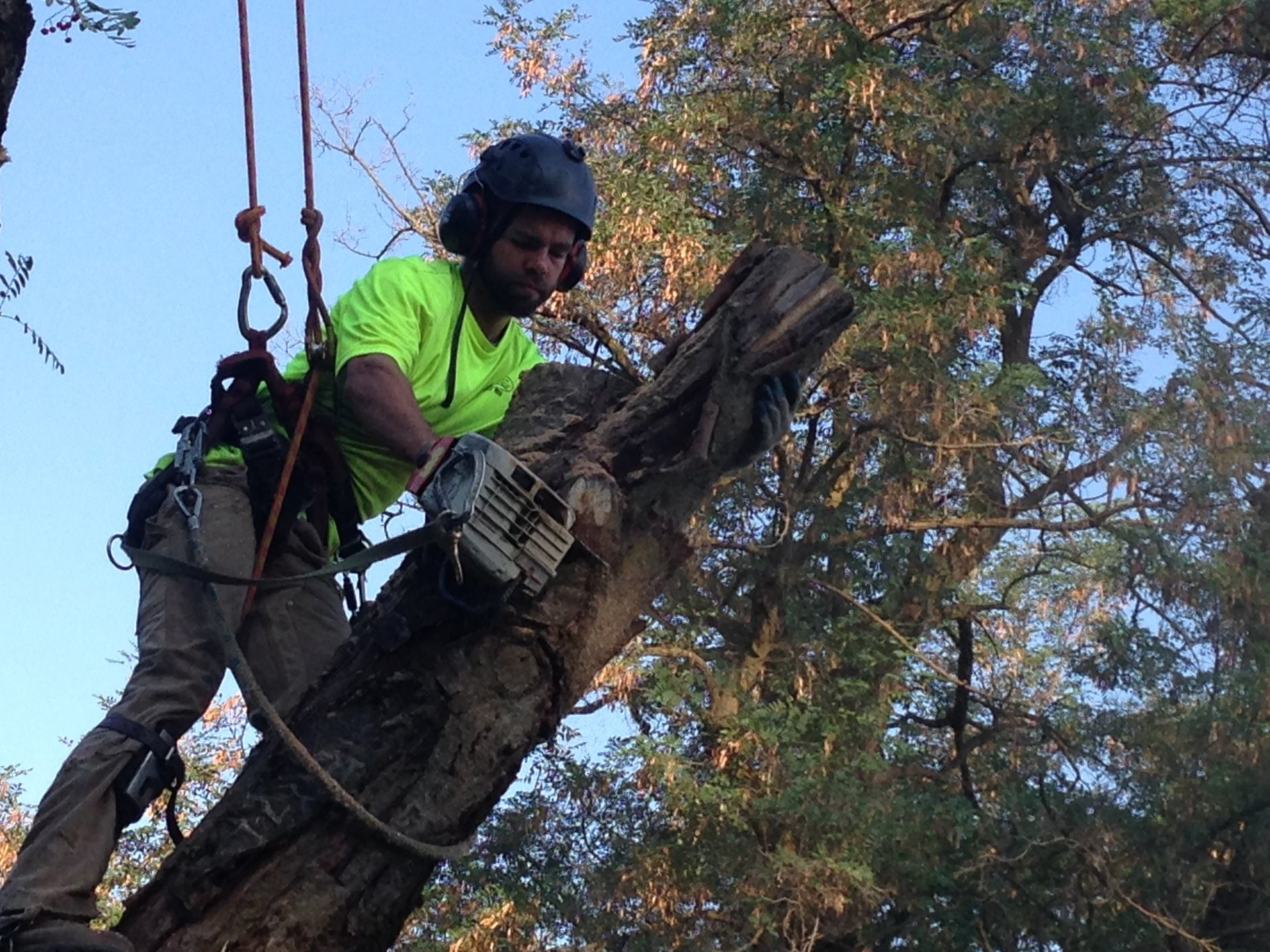 How to Avoid Accidents When Cutting Trees - Our Guide