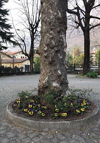 un tronco di un albero con dei fiori colorati attorno