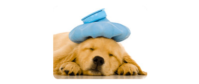 strathmore veterinary clinic a dog sleeping