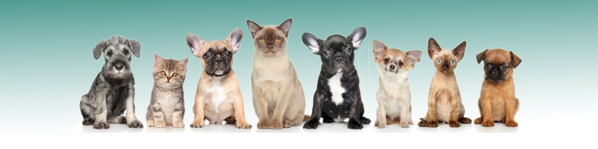 strathmore veterinary clinic different types of pets