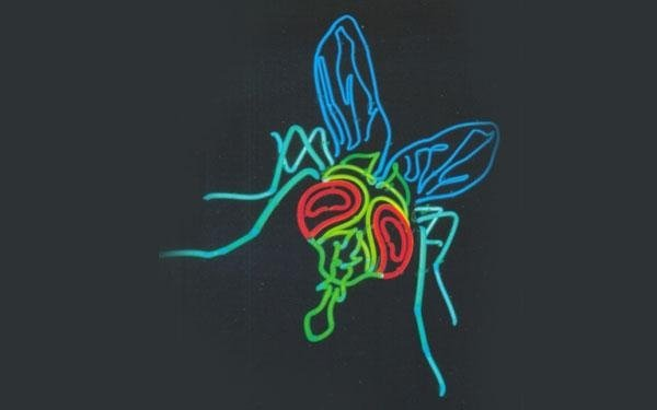 mosca neon