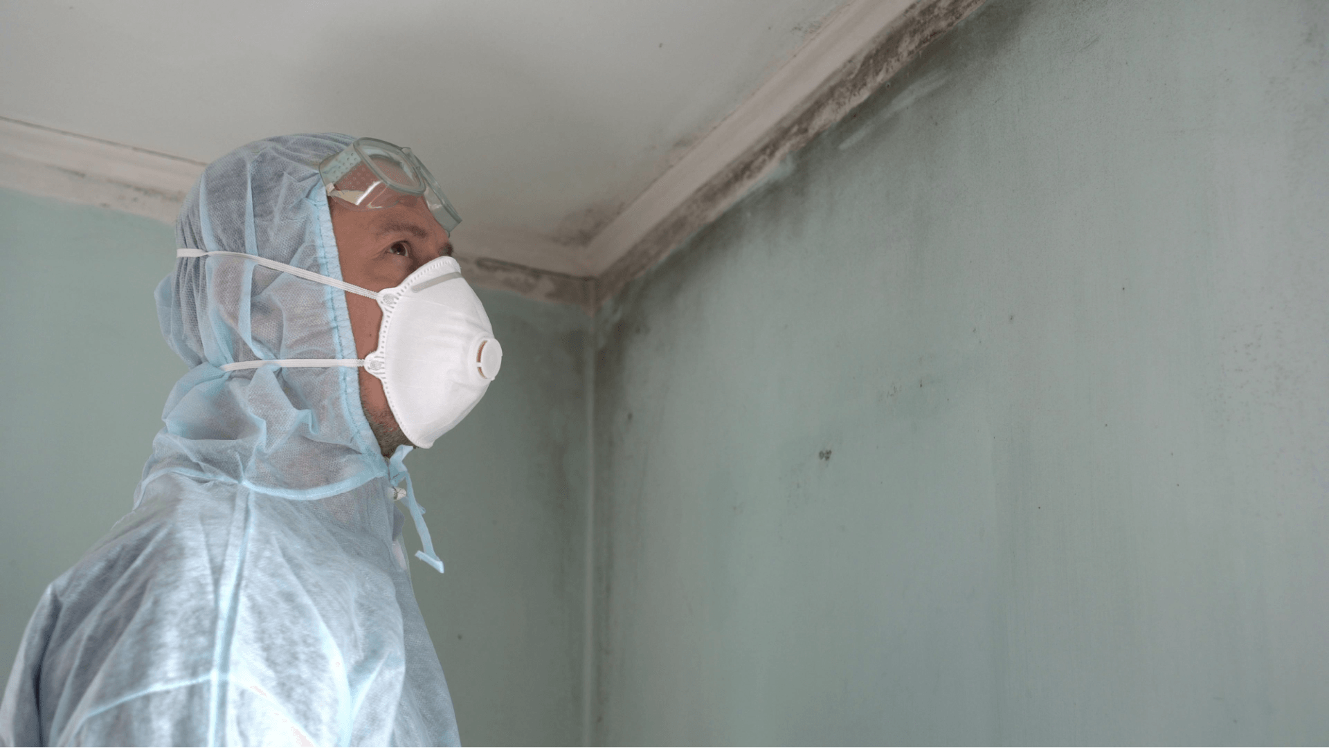 What S The Average Cost Of A Professional Mold Inspection In Eastern Iowa