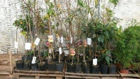 Innesti alberi da frutto e piante