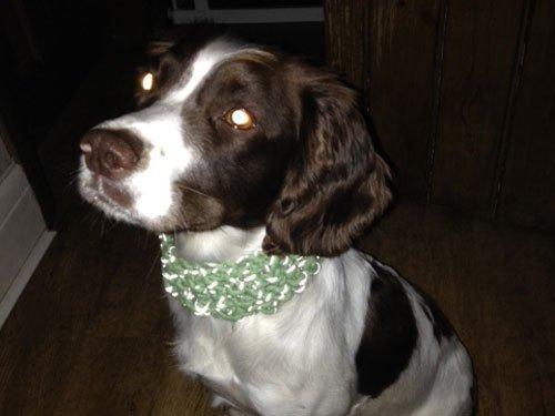 dog wearing a glow in the dark dogbeanie