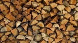 legni pregiati