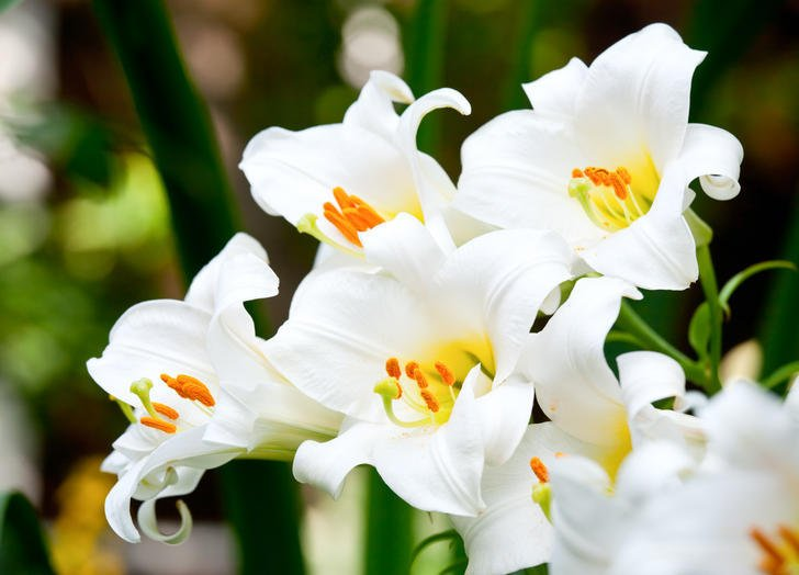 pure white flowers