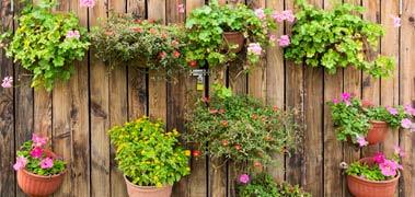 gardeners_nursery_service2