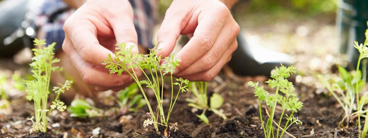 Plant Nurseries in Perth