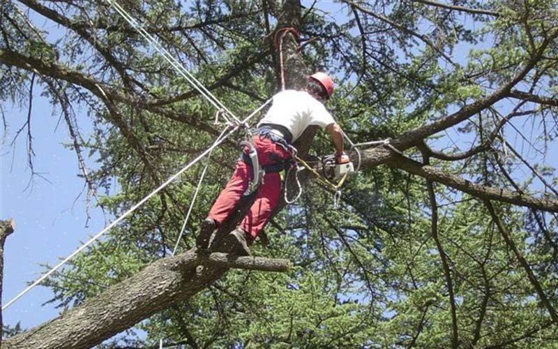 tree-climbing Il Castagno