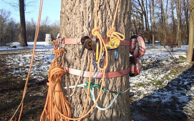 Sicurezza tree-climbing