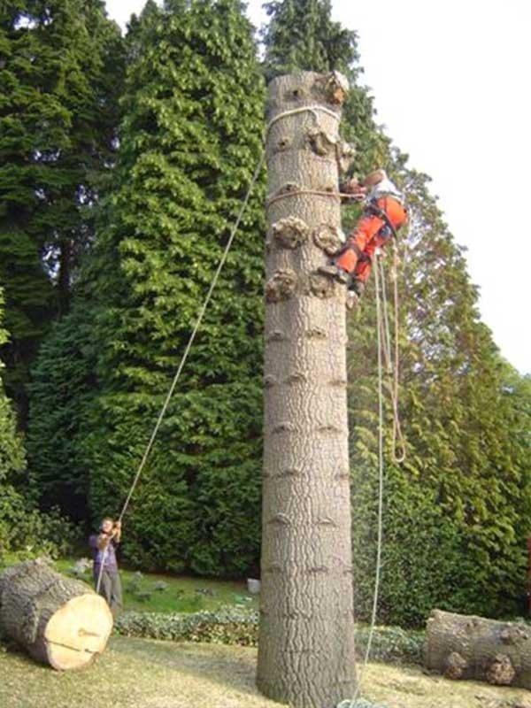 Manutenzione giardini in tree-climbing
