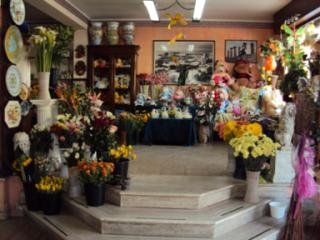 Cimino Salvatore - fiori e piante.