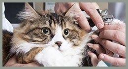 taglio unghie gatto