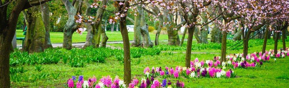 realizzazione giardinii Iannoni fiori Genova