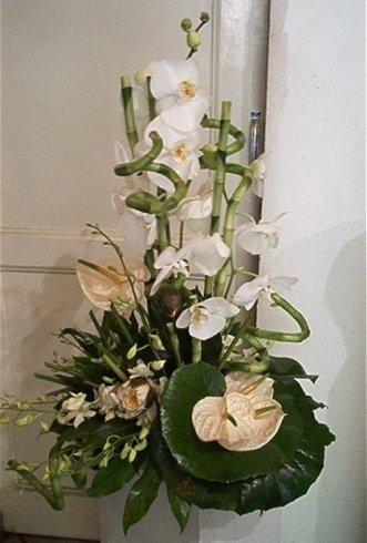 orchidee Genova