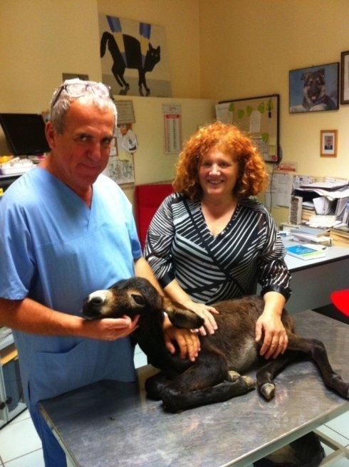 cure mediche, cure specialistiche animali, cure per cuccioli animali