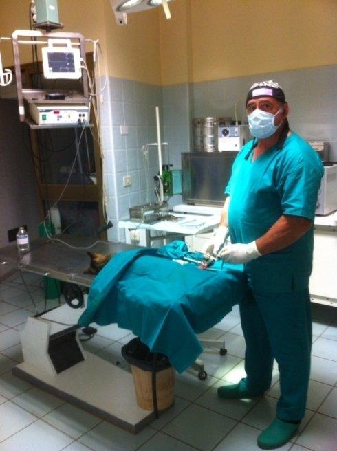 sala operatoria, medici veterinari, visite per animali
