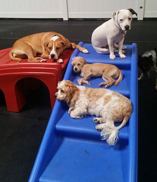 Puppy Day Care San Leandro, CA