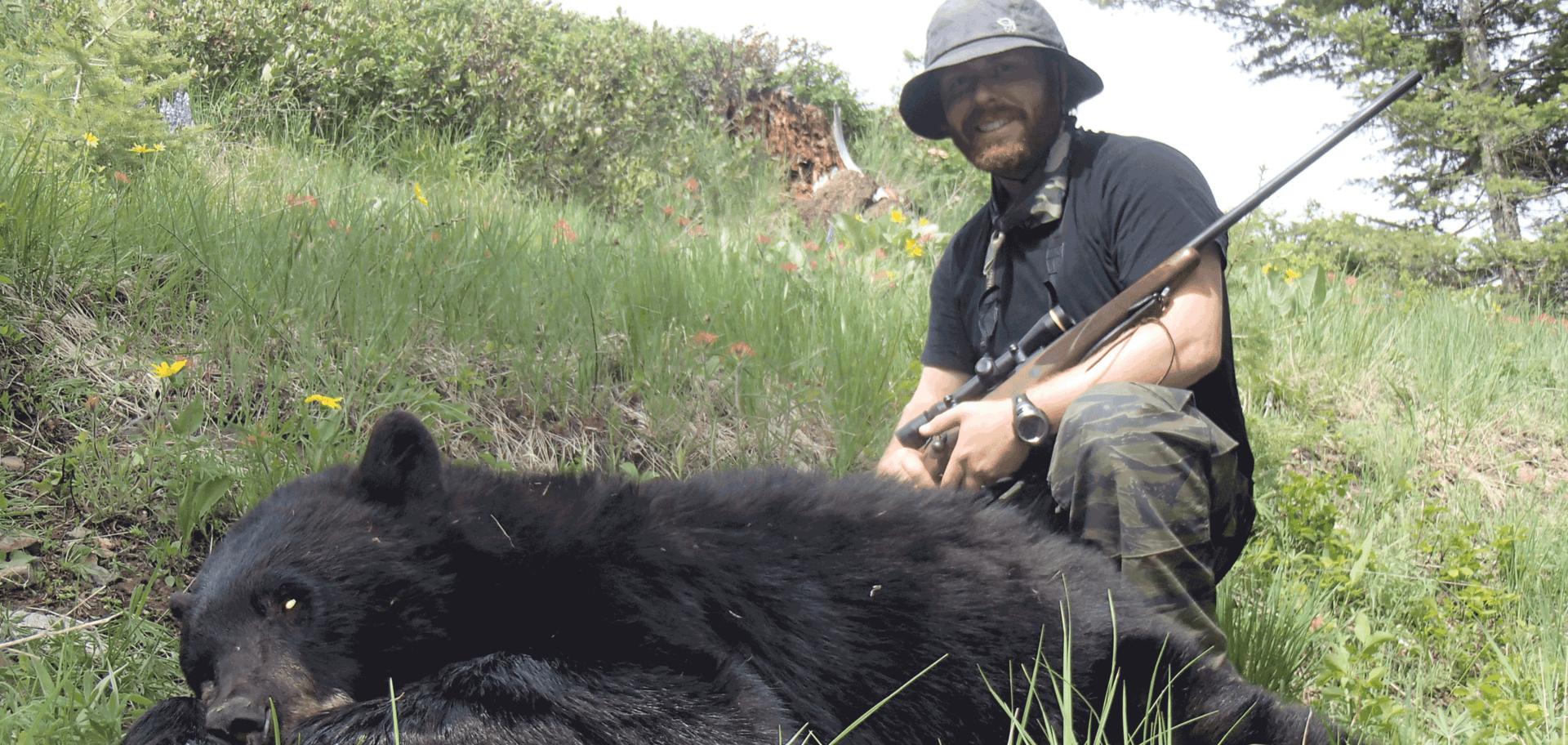 Black bear hunting Montana, Color phase bear