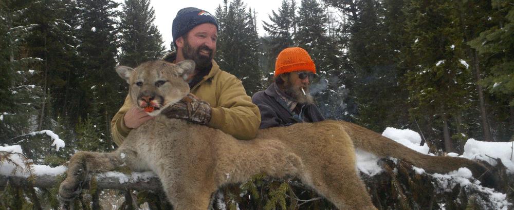 Mountain lion Hunting Montana, Guided Mountain Lion Hunts