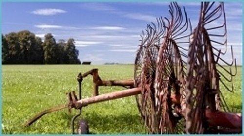 campo con erba