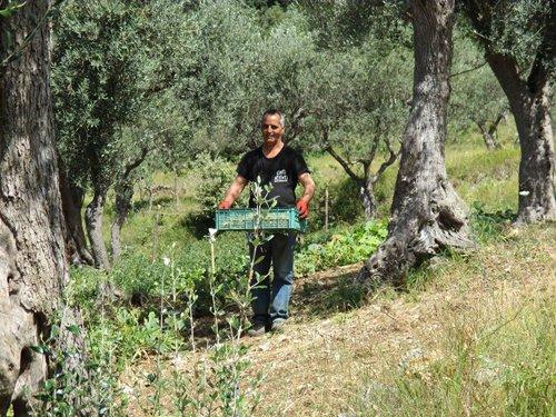 uomo con cassa di frutta in mano
