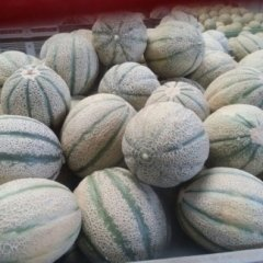 ingrosso meloni cantalupo