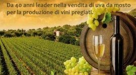produzione di vini pregiati