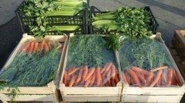 frutta fresca, primizie, composte, verdura sfusa e confezionata