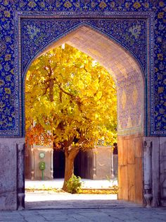 Iran mosque , mosque structure, mosque art , iran mosque art , tree in mosque