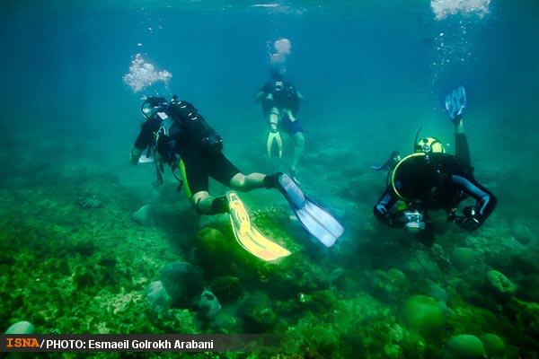 diving iran, persian gulf diving, persian gulf dive
