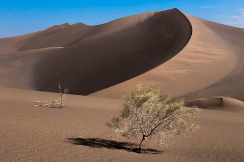 Iran desert, lut desert, tree in desert